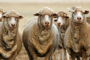 Australian-wool-testing-authority-300x200